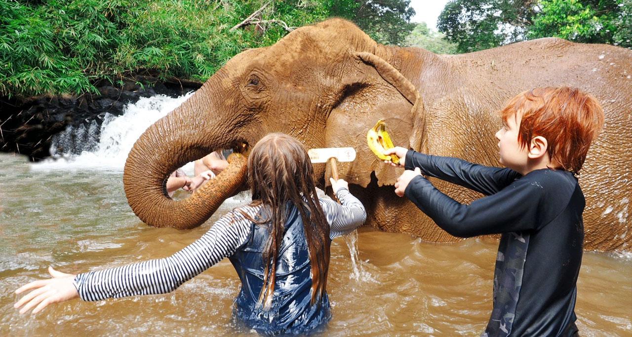 Touist Destinations in Cambodia: elephants in Mondulkiri