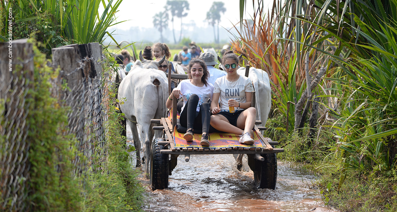 Tourists take ox cart ride in Bong Thom Village.