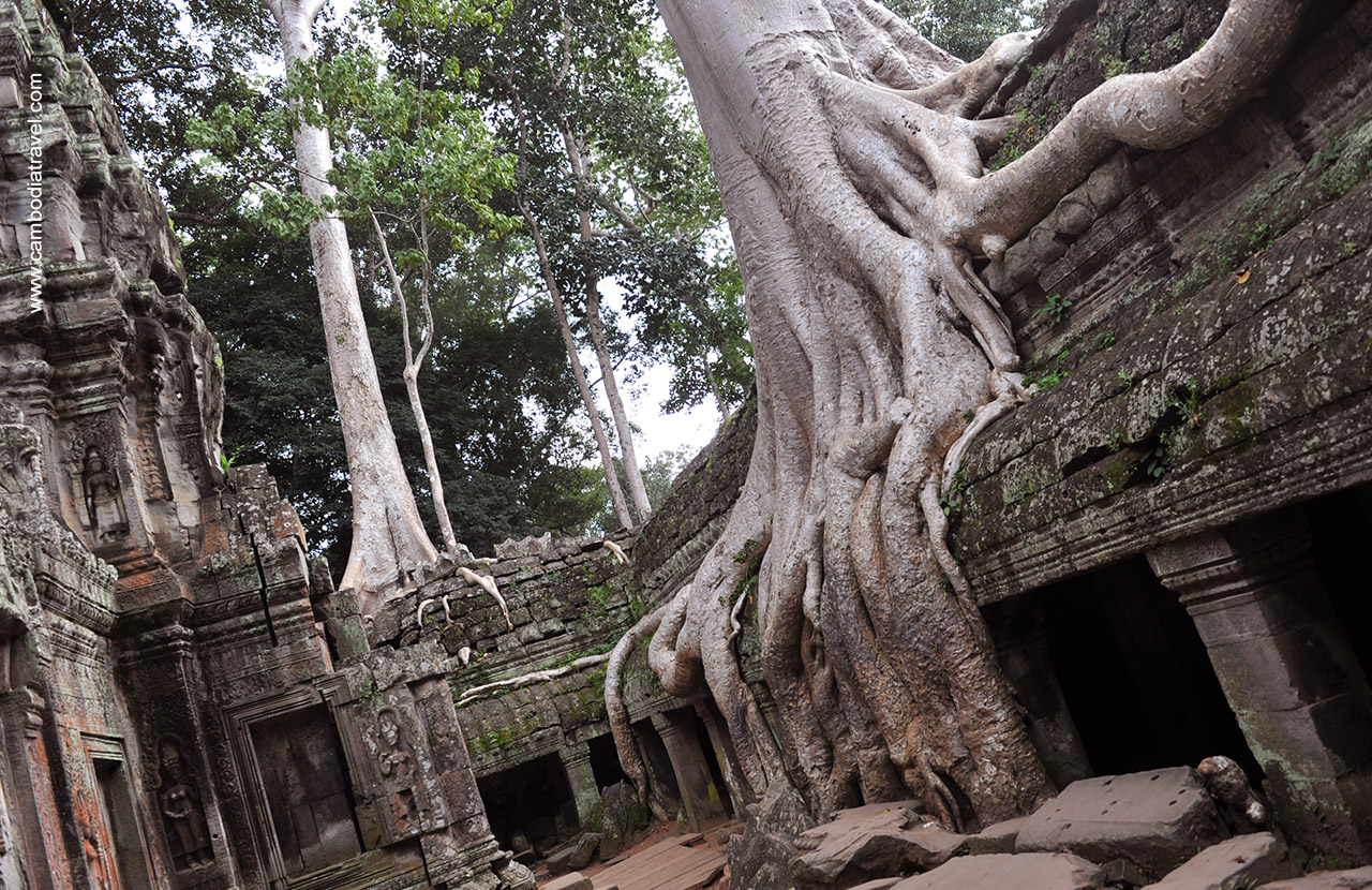 Ta Prohm is a popular photographed spot with iconic trees growing out of the ruins.